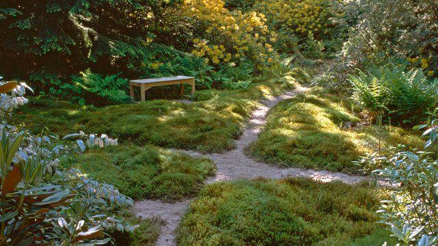 Rasen Diese Alternativen Zu Gras Gibt Es Rasen Alternative Naturnaher Garten Rasen