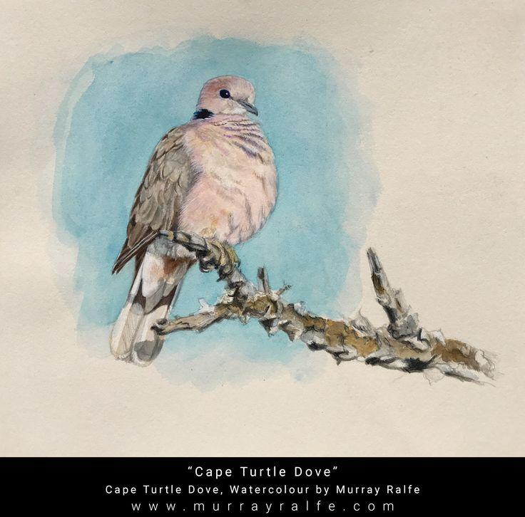"Title ""Cape Turtle Dove"" Medium: Watercolour on archival paper Depiction: Cape Turtle Dove Artist: Murray Ralfe"