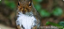 Squirrel Appreciation Day is fast approaching...