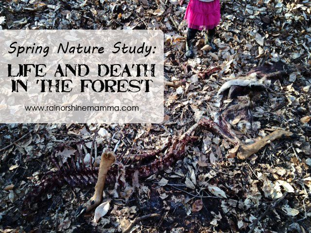 Spring Nature Study: Life and Death in the Forest