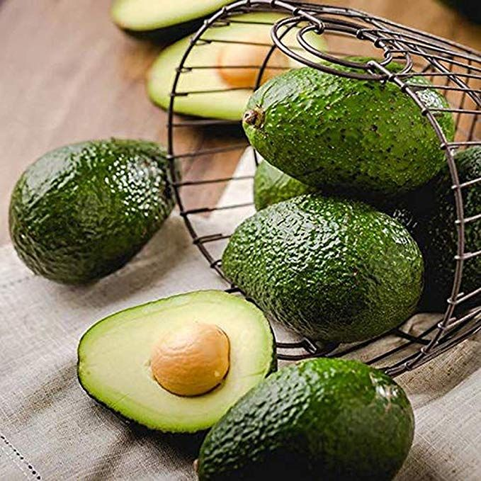3 HASS DWARF COLDHARDY AVOCADO SEEDS ORGANIC NON-GMO SEED to SPROUT /< 4 WEEKS!
