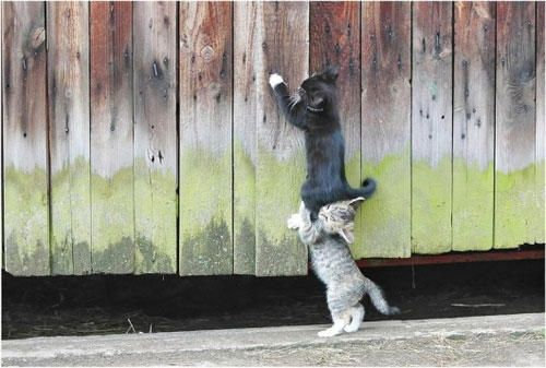 funny teamwork - https://www.facebook.com/different.solutions.page