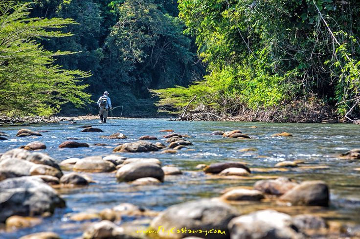 Searching for golden dorado on the upper Agua Negra River in the Bolivian Amazon.
