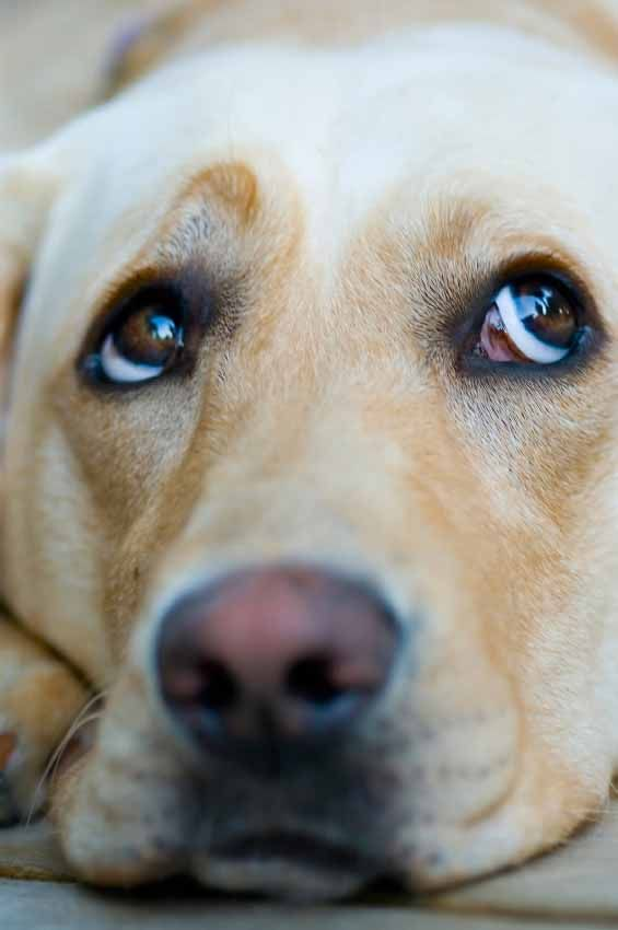 Daisy loves the Yellow Lab names found here... http://www.dog-names-and-more.com/Labrador-Retriever-Names.html