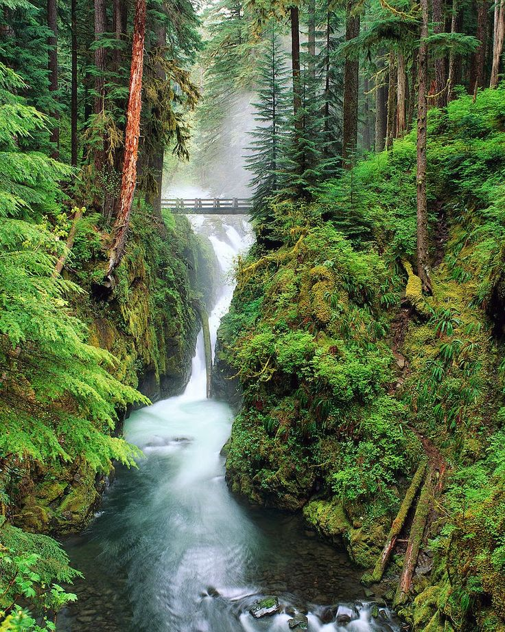 The Great Bear Rainforest 10 Worlds Amazing Forests