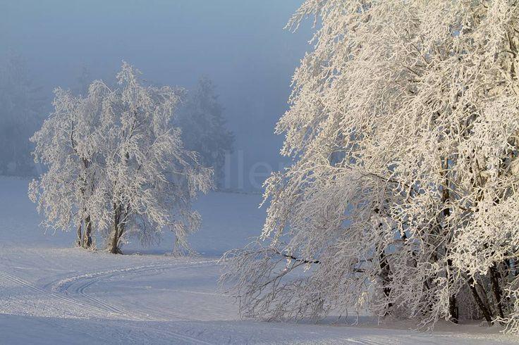 In Mauterndorf - Oostenrijk - hoop ik op veel sneeuw rijp zon heldere nachten goulashsoep kaiserschmarrn en mooie (sneeuwschoen)wandelingen. #photography #travelphotography #traveller #canonnederland #canon_photos #fotocursus #fotoreis #travelblog #reizen #reisfotografie #travelwriter#fotoworkshop #willemlaros.nl #landschapsfotografie #visitaustria #fantastisch_oostenrijk #mauterndorf #wintercamping #vivakamperen #caravan #sneeuwschoenwandelen #fb