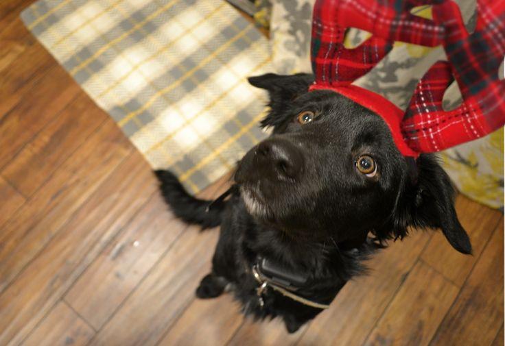 47 best images about fave dog breeds  on pinterest