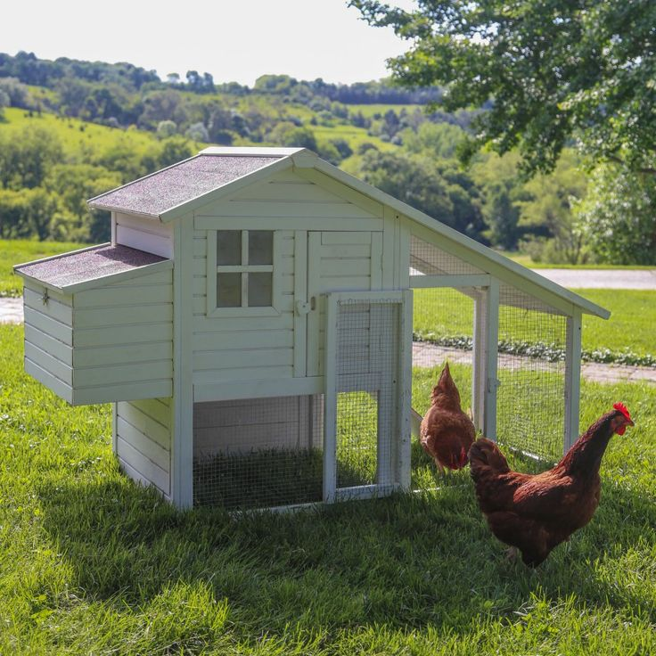 Boomer & George Deluxe 4 Chicken Coop With Run - White Wash - Chicken Coops at Hayneedle