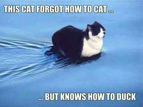 I'm a duck now, being a cat is rubbish!!!
