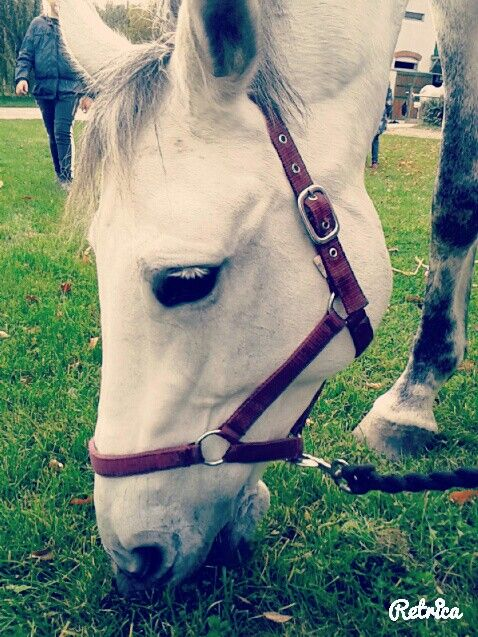 This is my horse she's name is Mátka