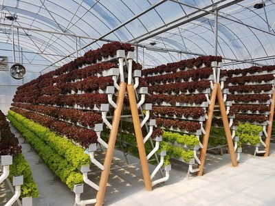 Pegasus Food Futures to Showcase Pioneering Crop Growing Method to Promote Global Food Security