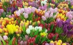 Egy kis tavasz
