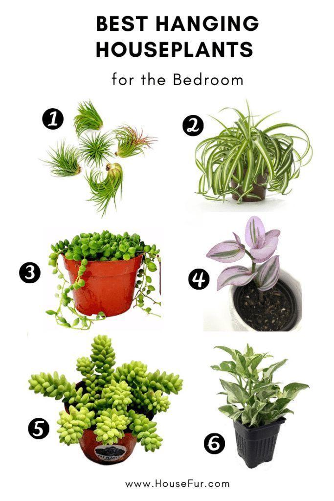 Hanging Indoor Plants Bedroom