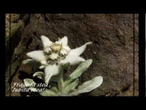 EDELWEISS - Violin ANDRE RIEU HD 1080