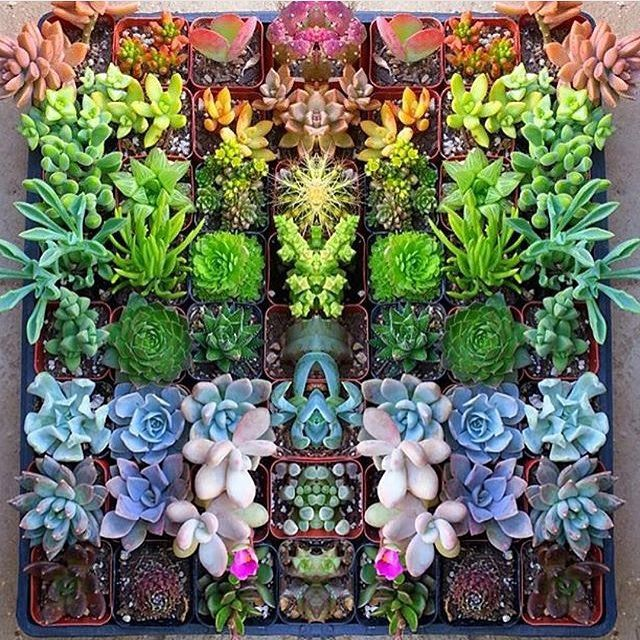 Make your own rainbow  w/ @jenssuccs  #succulent #succulents #succulentsofinstagram