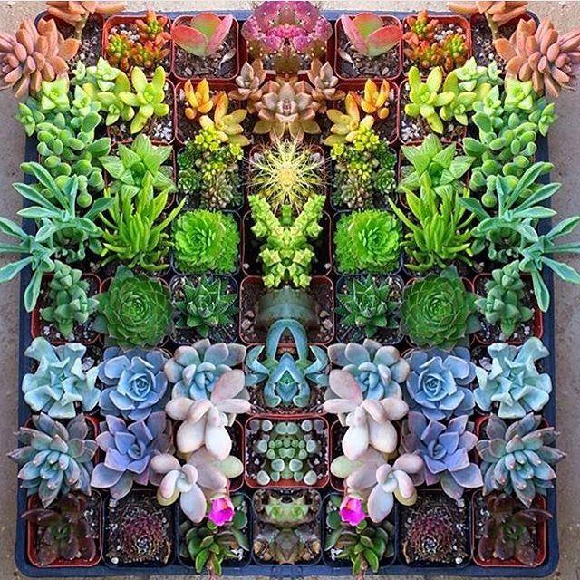 Make your own rainbow  w/ @jenssuccs  #succulent #succulents #succulentsofinstagram