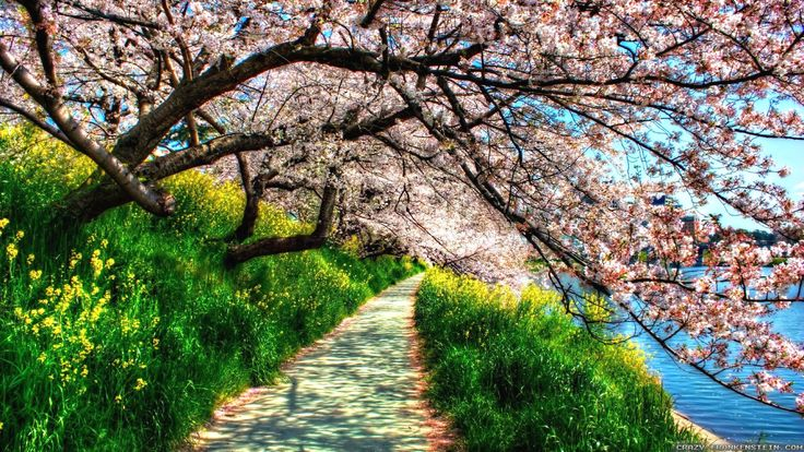 Schöner Naturfrühling – großes Naturfrühlings-Bild