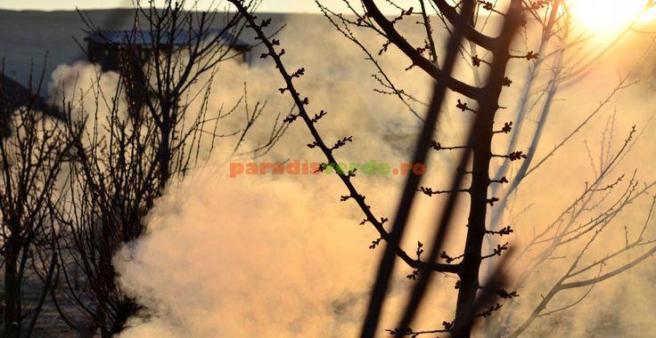 Cum protejăm livada de brumă | Paradis Verde