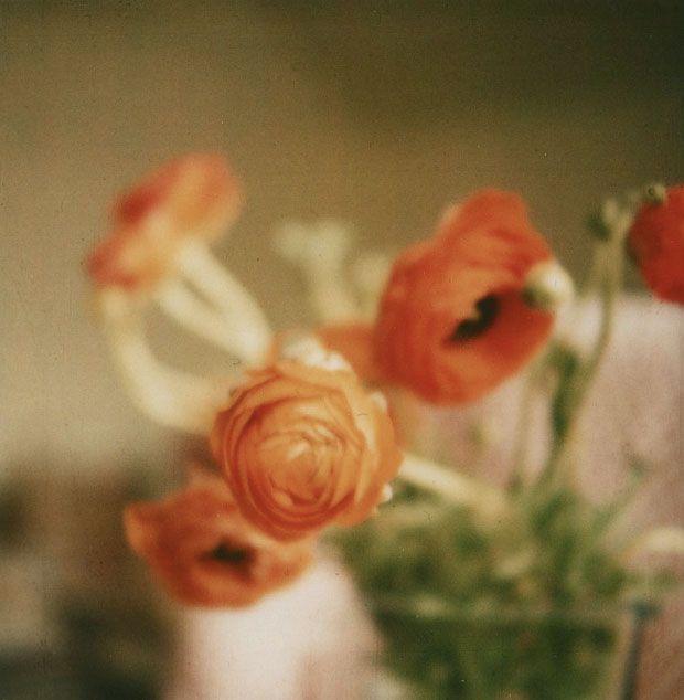 .: Color Orange Coral, Color Inspiration, Apricot Ranunculus, Art Inspiration, Brilliant Photos, 123 Photography, Photo Inspiration, Flower Power, Photographic Inspiration
