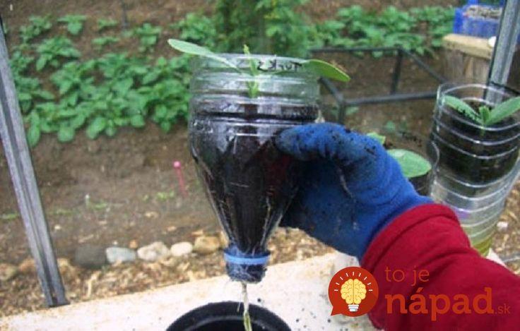 Dopestujte si bohatou úrodu okurek v plastové lahvi: Je to jednoduché a nepotrebujte ani zahradu!