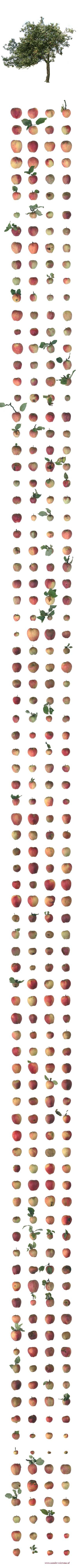 All the apples of one tree | made by Xander Wiersma via www.xander-wiersma.nl
