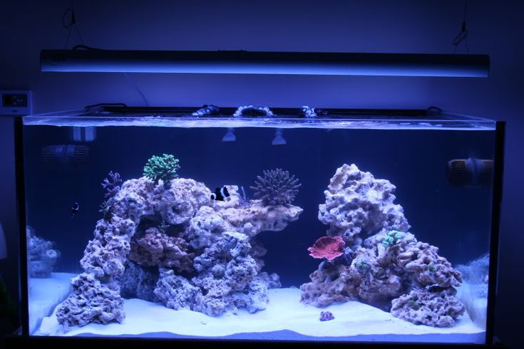 17 best ideas about reef aquascaping on pinterest reef for Aquarium recifal nano