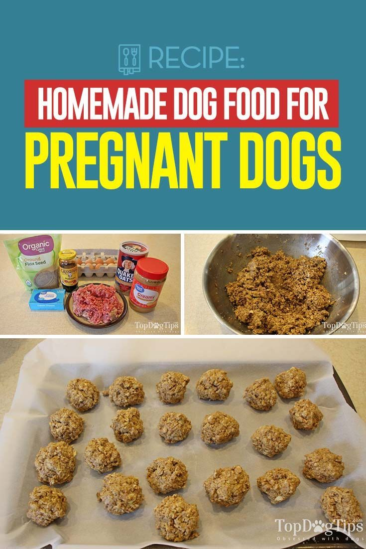 Recipe Homemade Dog Food For Pregnant Dogs Dog Food Recipes