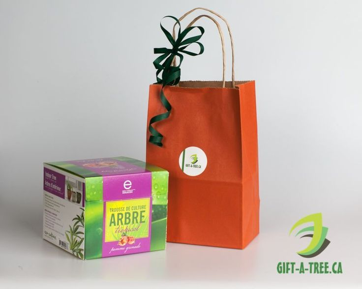 Tropical Indoor Tree - Pomegranate. Find at: http://www.gift-a-tree.ca/apps/webstore/products/show/3931675