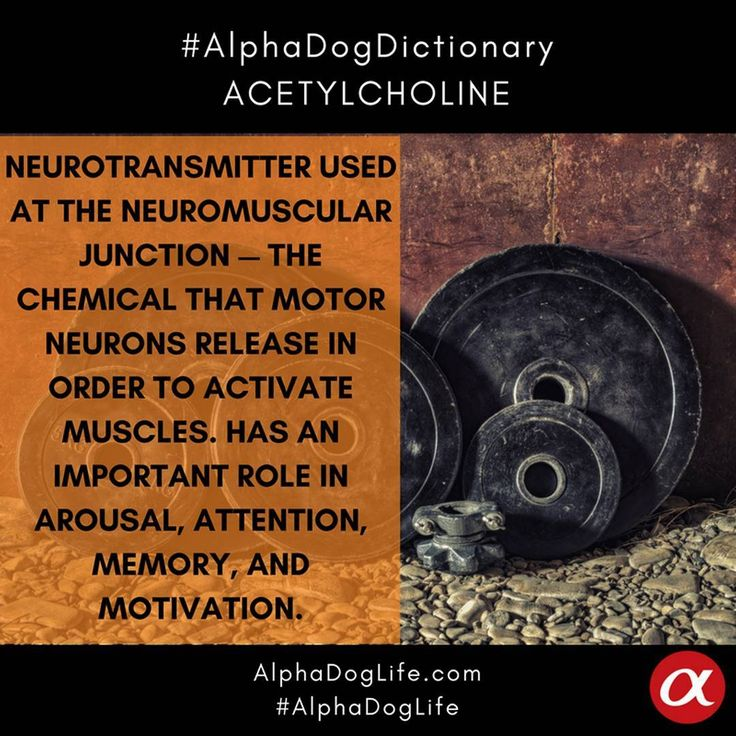 #WordOfTheDay: #Acetylcholine is an #organic chemical that functions in the #brain and #body of many types of #animals, including humans, as a #neurotransmitter—a chemical released by nerve cells to send signals to other cells. Acetylcholine is the neurotransmitter used at the neuromuscular junction—in other words, it is the chemical that #MotorNeurons of the #NervousSystem release in order to activate #muscles. Has an important role in #arousal, #attention, #memory and #motivation…
