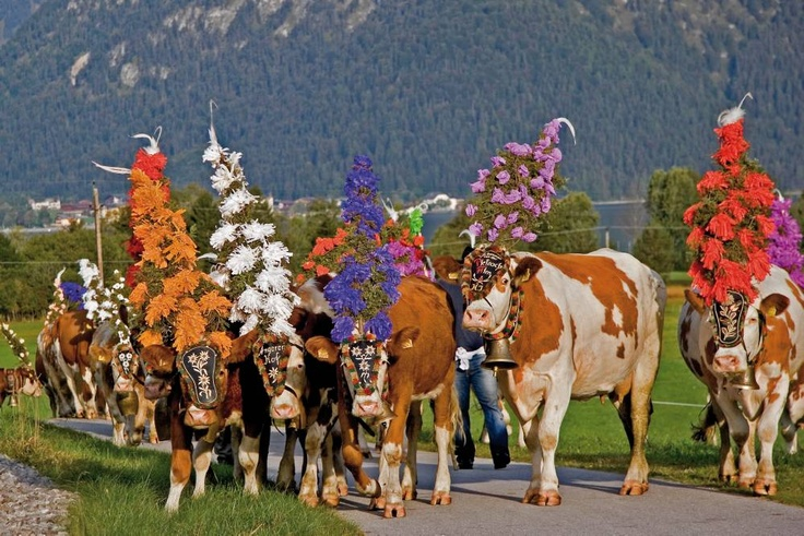 Alpbach 2011 Almabtrieb Cow festival | love loving you... the best feeling ever!!! - Page 93