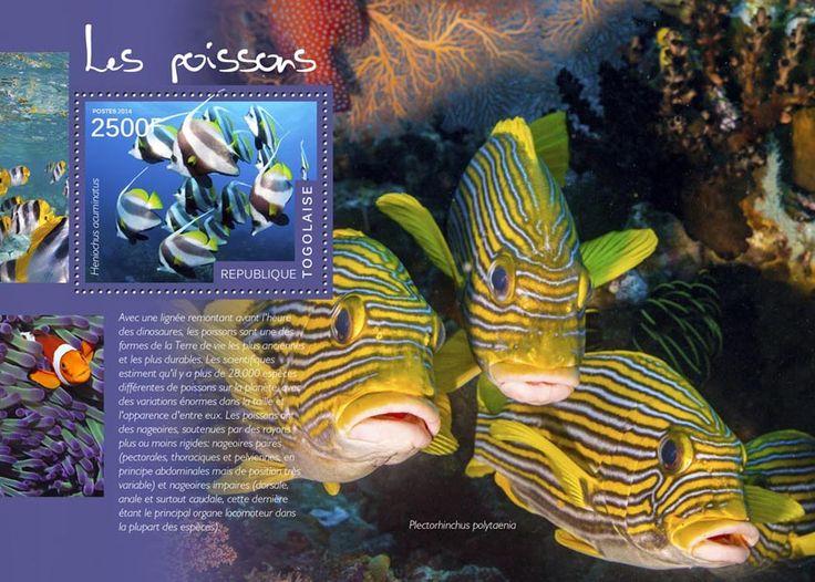 TG 14506 bFishes  (Heniochus acuminatus,  Plectorhinchus polytaenia)
