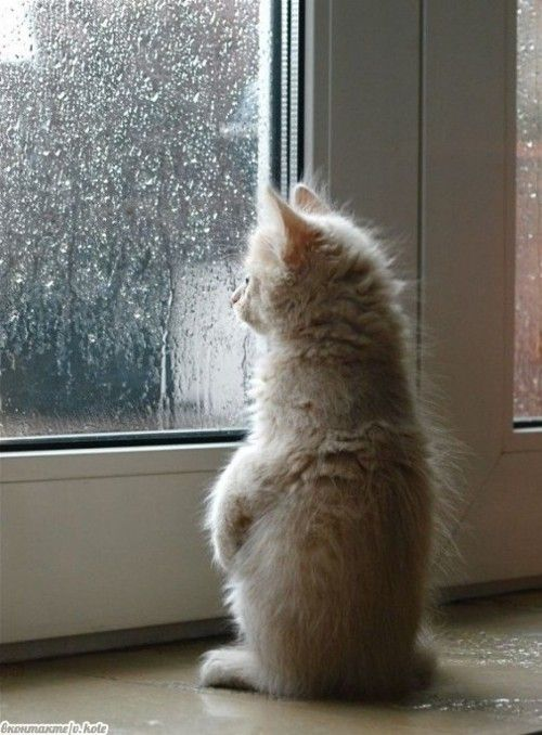 Watching it rain