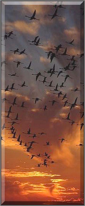 amazing FLAMINGO SWARM at SUNSET  #quelle: www.pixabay.com