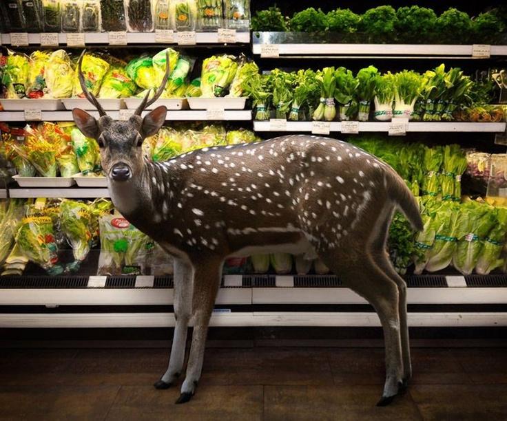Unusual Unique Animals In The Supermarket – Save Animals