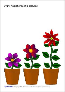 Plant height ordering pictures (SB2300) - SparkleBox