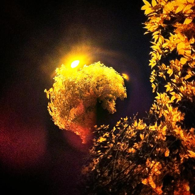 Tiny Golden Array Planet