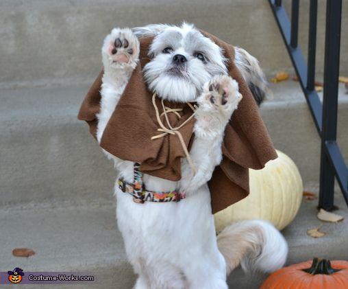 Ewok - 2012 Halloween Costume Contest
