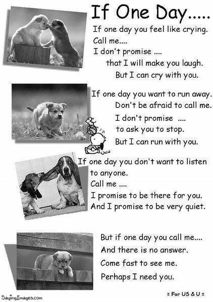 animal love is true