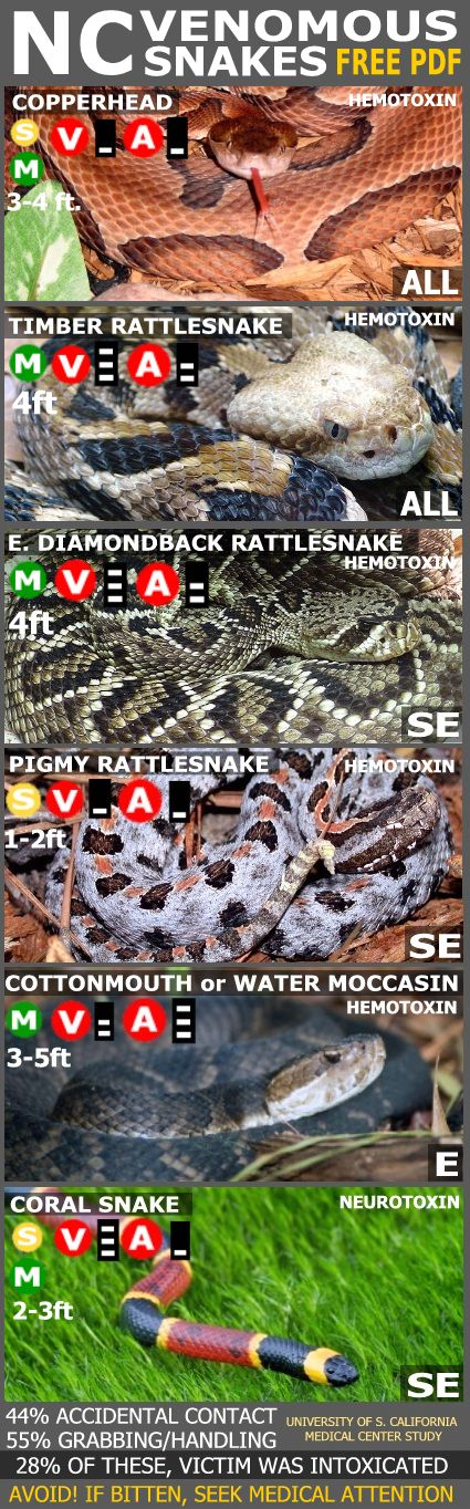 Venomous snakes of North Carolina. Out of 37 species, only 6 are venomous. Avoid these at all costs.