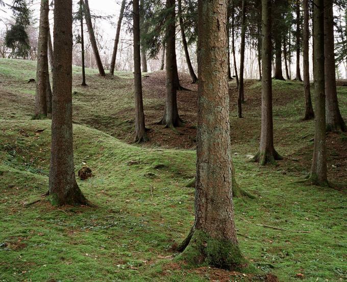 La forêt de Verdun, une forêt de mémoire et d'émotions (Meuse): Le champ de bataille de 1914-1918. Sur 9.600 ha, la forêt domaniale de Verdun préserve toute l'émotion du Champ de bataille de la Grande Guerre de 1914-1918. Sise #verdun