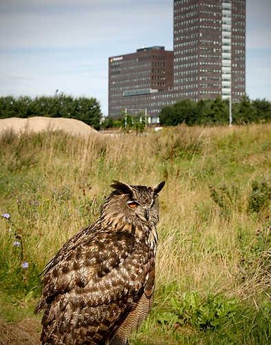 Opnames van New Marshlands (2009) van Frank Koolen op SITE2F7. © Gert Jan van Rooij, Museum De Paviljoens