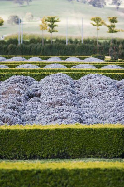 Mayfield garden lavender parterre gardens gardening for Garden parterre designs