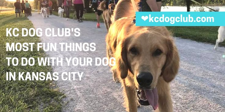 Do you love taking your dog on adventures with you in Kansas City? Read KC Dog Club's list of the most fun things to do with your dog in Kansas City.