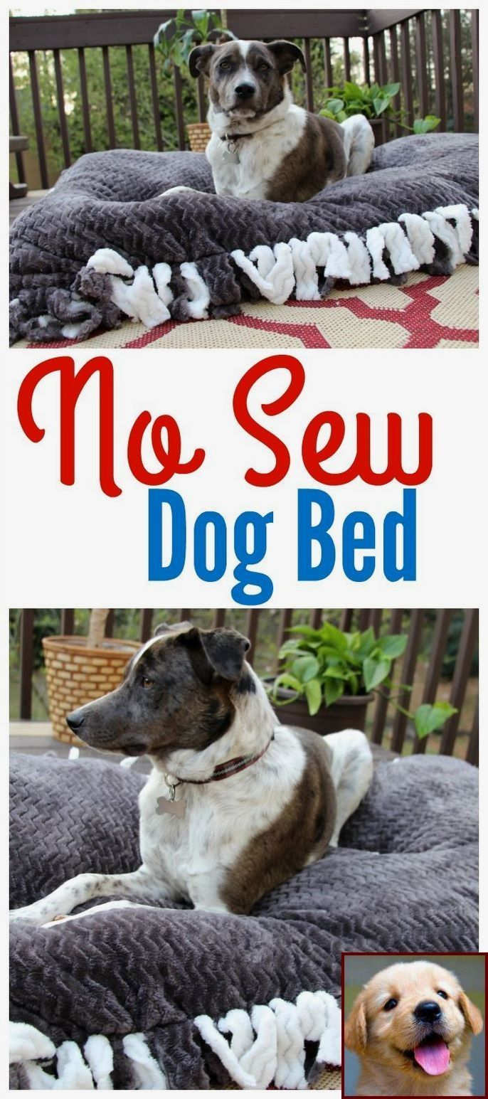 Dog Behavior Myths And Clicker Training Dog To Shake