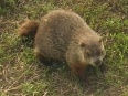 Everyone in the United States and Canada has heard about Groundhog Day on February 2. Punxsutawney Phil, the Pennsylvania groundhog, is a national...