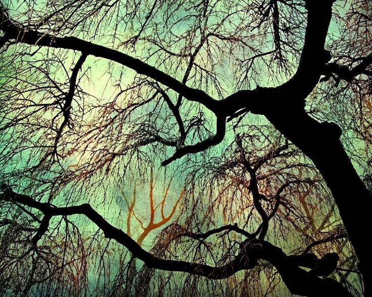 Tree photography, dark green decor,moonlight woodland winter photo Savannah Georgia,nature photo fine art print oak tree photo absinth color by CarlChristensen on Etsy https://www.etsy.com/au/listing/62398673/tree-photography-dark-green