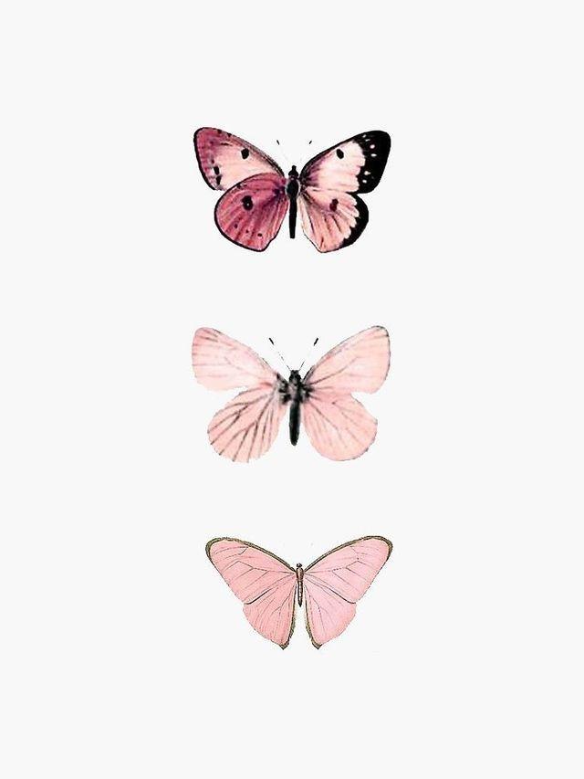 Pin By Alissa On Pngs Butterfly Wallpaper Iphone Pastel Pink Aesthetic Pink Wallpaper Iphone