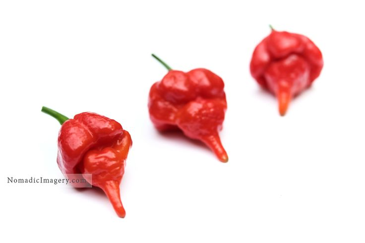 Trinidad Scorpion Moruga Chilies. One of the hottest chilies in the world back in 2012 before being knocked off the top spot by the current worlds hottest chili of the Carolina Reaper. Different sizes and types of Chili images to download @nomadicimagery.com #chilies #chillies #chili #peppers #food #nomadicimagery