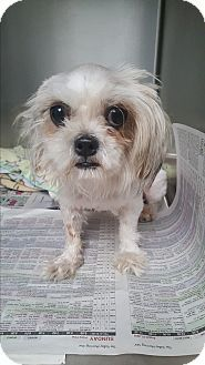 Brownsville, TX - Maltese Mix. Meet Mia, a dog for adoption. http://www.adoptapet.com/pet/17084765-brownsville-texas-maltese-mix
