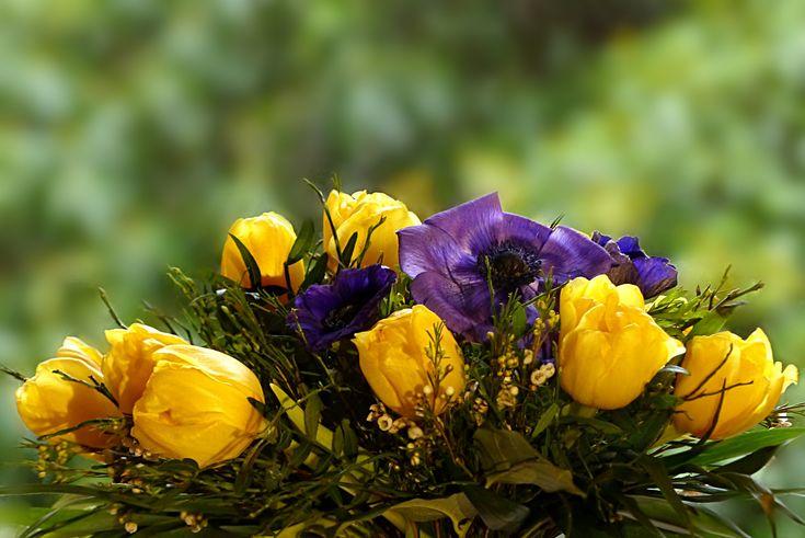 Bukett med tulpaner och anemoner